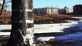 在河附近的桦树在城市公园在春天 股票录像