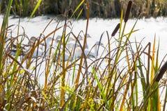 在河附近的秋天风景 免版税库存图片