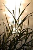 在河附近的草 免版税库存照片