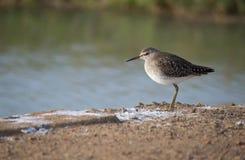 在河附近的鸟 图库摄影