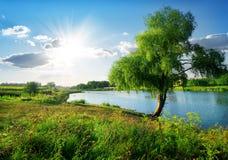 在河附近 免版税库存图片