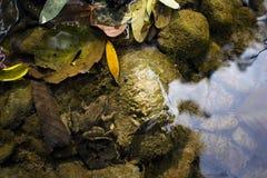在河,下落的叶子的五颜六色的秋天背景青蛙和 库存图片