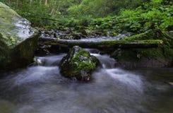 在河,克罗地亚的木头 图库摄影