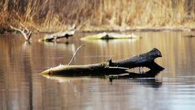 在河,湖的日志树 股票录像