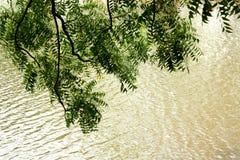 在河结构树附近 免版税库存图片