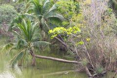 在河结构树附近 免版税图库摄影