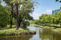 在河结构树水附近 库存图片