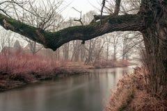 在河结构树 库存图片