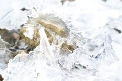 冻水在河 库存照片