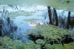 在河` s三角洲的Swampland 库存照片