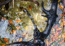 在河` S边缘的黑漂流木头 库存图片