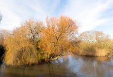 在河Avon克赖斯特切奇多西特英国英国河岸的美丽的树  库存图片