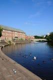 在河Derwent,德比的野生生物 库存照片