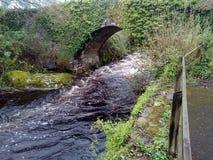 在河Erme的常春藤桥梁 免版税库存图片