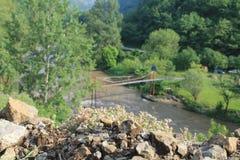 在河ibra上的草甸植物 库存照片