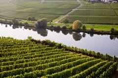 在河Mosel的举世闻名的弯曲在特里滕海姆附近与 免版税库存照片