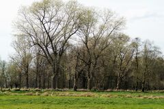 在河Niers的春天 免版税库存照片