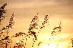 在河Rotte的五颜六色的日落在有反射的Zevenhuizen在水中在荷兰 免版税库存图片