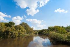 在河Zyuzelga的河岸的杨柳丛林 库存照片