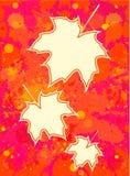 在油漆背景的槭树叶子 库存图片