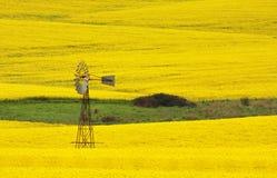 在油菜的领域的风车 免版税库存图片