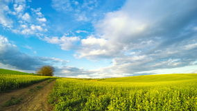 在油菜籽领域的云彩 时间间隔UHD 股票视频