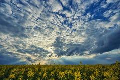 在油菜籽领域的美丽的天空 免版税库存图片