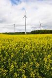 在油菜籽领域的风车 德国 库存图片
