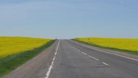 在油菜籽黄色领域中的高速公路反对天空蔚蓝 影视素材