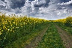 在油菜籽黄色花田,与喜怒无常的天空的春天风景的黑暗的地面路 免版税库存图片
