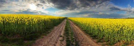 在油菜领域的日落与道路在斯洛伐克-全景 免版税库存图片