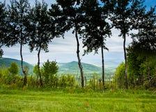 在沼地春天的树在山 免版税图库摄影