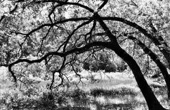 在沼地的树 免版税库存图片