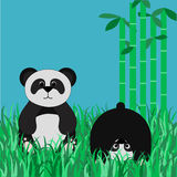 在沼地的熊猫 库存图片