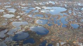 在沼泽上的飞行,顶视图 股票录像