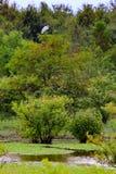 在沼泽上 免版税库存照片