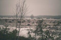 在沼泽为收获培养的区域beeing的草皮领域-葡萄酒减速火箭的影片神色 图库摄影