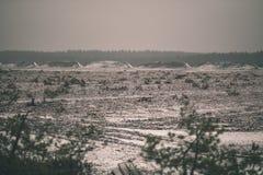 在沼泽为收获培养的区域beeing的草皮领域-葡萄酒减速火箭的影片神色 库存照片