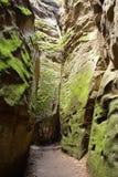 在沼泽之间的步行方式包括墙壁 库存图片