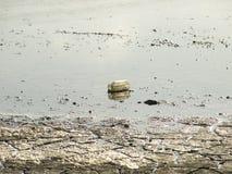 在沼泽地乱丢的一个玻璃瓶子 免版税库存图片