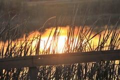 在沼泽地的佛罗里达日出 库存图片