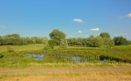 在沼泽地风景树的水池在Kalkense Meersen自然reerve,富兰德,比利时 库存照片