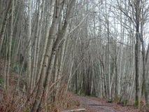 在沼泽旁边的足迹 库存图片