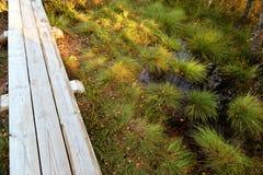 在沼泽的一个木走道 免版税库存照片