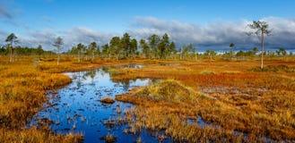 在沼泽的五颜六色的秋天 免版税库存照片