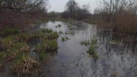 在沼泽的低飞行 鸟瞰图 录影4K 影视素材