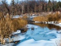 在沼泽的冬天 库存图片