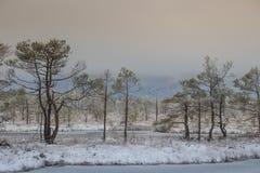 在沼泽的冬日 免版税库存照片