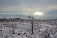 在沼泽的冬日 免版税库存图片