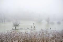 在沼泽的冷的早晨 免版税库存图片